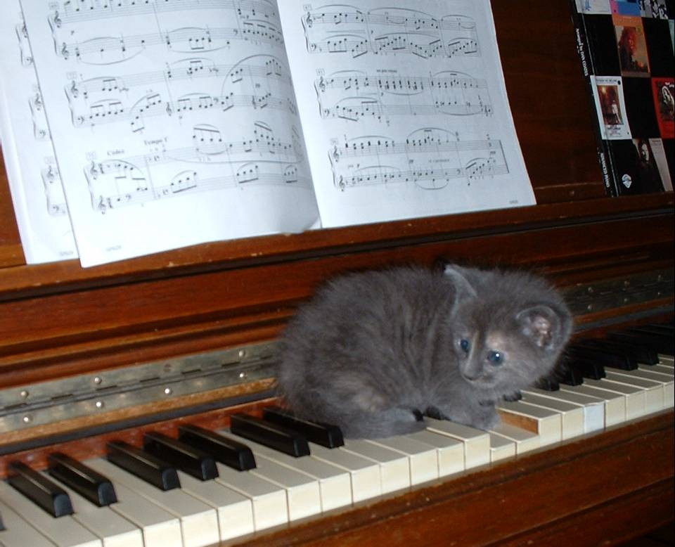 Kitten playing the piano
